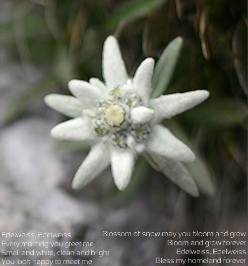 edelweissw